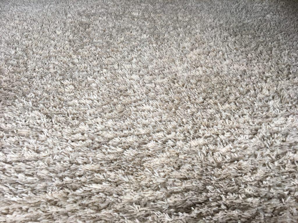 Carpet Cleaning Hastings